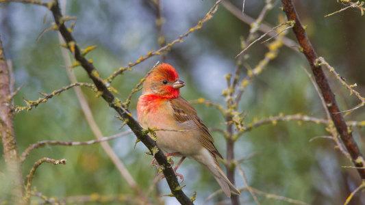 """北京市启动""""十佳生态旅游观鸟地""""鸟类资源调查工作"""