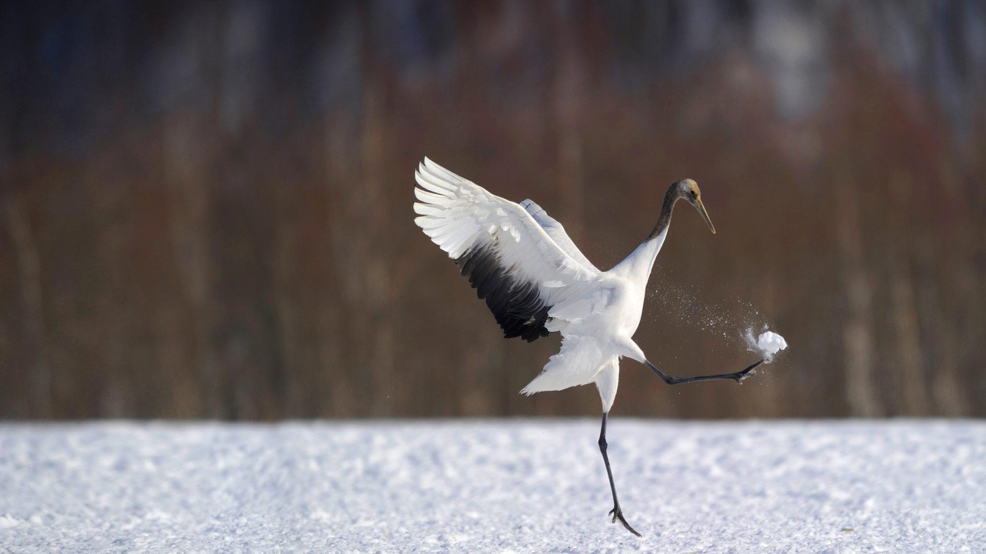 蓝天白云鹭鸟飞 生态铁路入画来