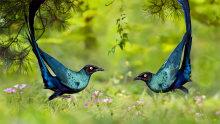 非法狩猎野生鸟类 13人被判刑