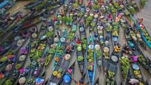 香港:白菜样本除害剂残余超出法例标准