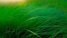 浙江省地方税务局公告2012年第14号 浙江省地方税务局关于《房地产权属转移纳税申报表》、《耕地占用税纳税申报表》及申报附报资料的公告[全文废止]