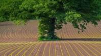 《废土行动》橡木获得途径