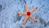 国家税务总局河南省税务局公告2018年第8号 国家税务总局河南省税务局关于普通发票有关事项的公告