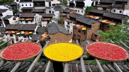 南京油菜地种出龙袍 盘点那些极具特色的农田