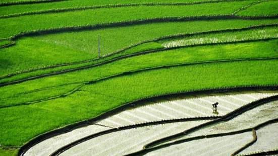 全国人大常委会启动种子法实施情况执法检查