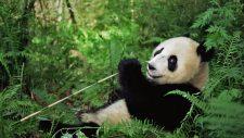 关于《中华人民共和国个人所得税法修正案(草案)》的说明