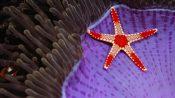 中国的反制措施来了:对美商品提高加征关税