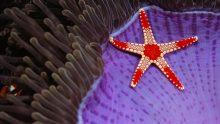 《云裳羽衣》婪婪盛宴正式开席 今夜谁能成为凡尔赛宫最美丽的星
