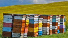 纽卡斯尔大学国际贸易课程基本情况解析