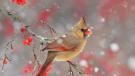 非凡干邑 致敬金棕榈 Rémy Martin人头马携手中国区品牌挚友秦岚、任重亮相戛纳红毯